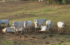 Trequanda e Pucciarella: la firma di Cotarella sui vini della Cariplo