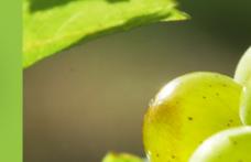 Il Concours Mondial de Sauvignon assegna 9 allori all'Italia