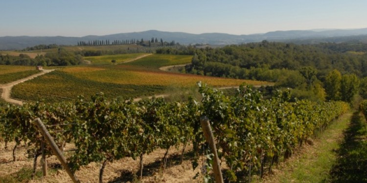 La Regione Toscana in aiuto del Chianti