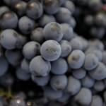 monti delle vigne 4