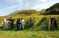 Vendemmia in Trentino: annata super per il Pinot grigio
