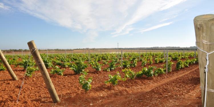 Dove va la Puglia del vino? Rossi autoctoni al giusto prezzo
