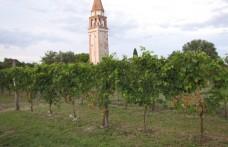 Venissa en primeur: l'antica uva Dorona