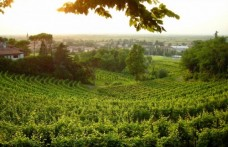 San Martino in Friuli tra feste paesane e cene in cantina