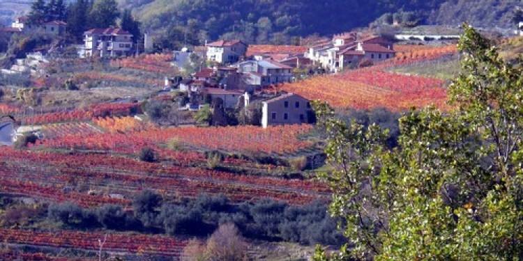 In Liguria la nuova Igt Terrazze dell'Imperiese