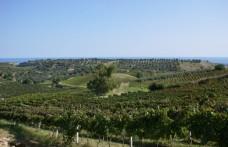 Nasce la Casa dei Vini di Calabria. Due sedi: Cirò e Lamezia Terme