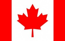 In Canada è legale ML01, un lievito geneticamente modificato