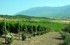 I REPORT di Civiltà del bere: Montepulciano