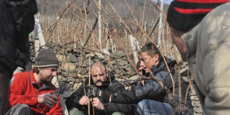"""In Valtellina si pota alla """"Simonit & Sirch"""""""