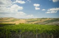 Sicilia en Primeur: protagonista l'ambiente