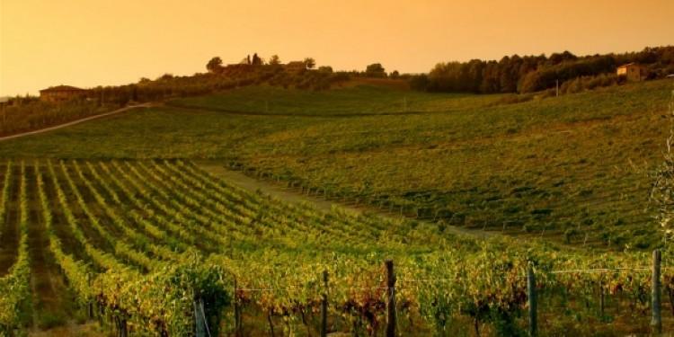 Annate storiche vini mitici (14)