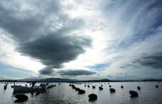Speciale Sardegna: Si studiano gli autoctoni. A breve la Doc Cagliari