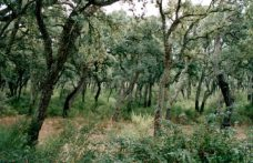 """Biodiversità ed emissioni zero, gli obiettivi del progetto """"Sughereta in Sardegna"""""""