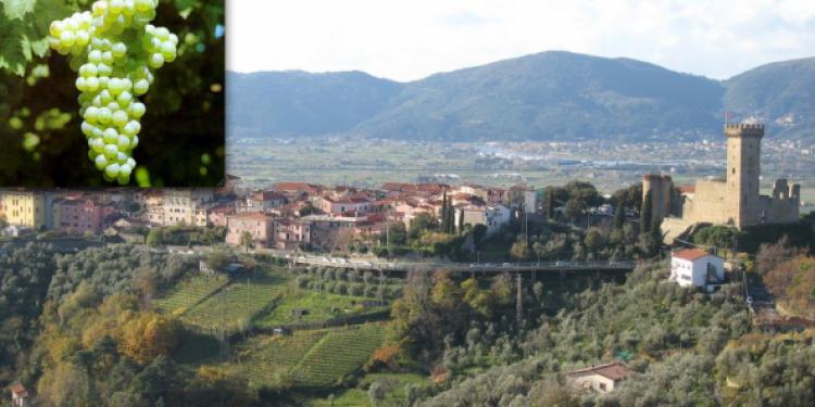 Apre il Museo multimediale del Vermentino a Castelnuovo Magra