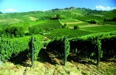 Speciale Piemonte: Avanti tutta. Nel mondo  con elegante determinazione
