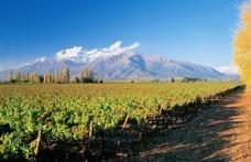 Concha y Toro. È cilena la seconda Cantina con più ettari al mondo