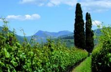 Consorzio Tutela Vini Valpolicella: lavoreremo per la sostenibilità