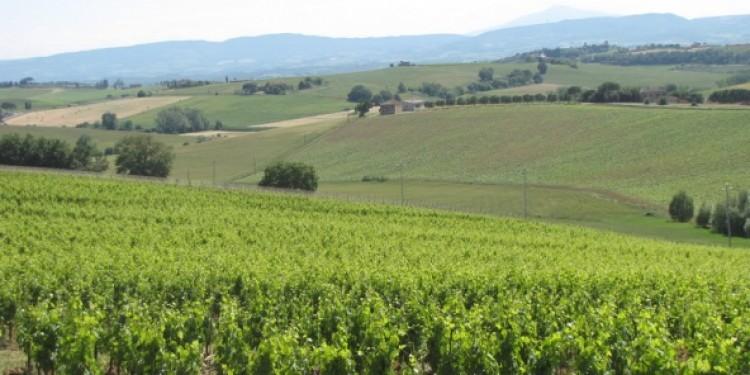 Avignonesi acquista 16 nuovi ettari nella zona storica del Montepulciano