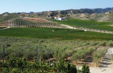 Euvite, la rivincita della Calabria