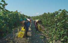 Fotografia della Puglia viticola: il 91% dell'export è in Europa e il valore economico cresce del +8,6%