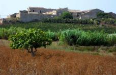 Irvos: quando un lievito siciliano fa la differenza
