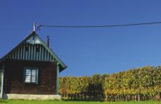 Viaggi nelle terre del vino: Burgenland, trionfo del Blaufränkisch