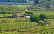 Soavecru: a Vinitaly lo stand dei 16 produttori soci