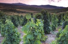Viaggi nel mondo del vino: In Ungheria alla scoperta del Tokaj