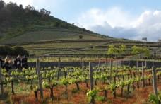 Una zonazione per valorizzare i vini dell'Etna