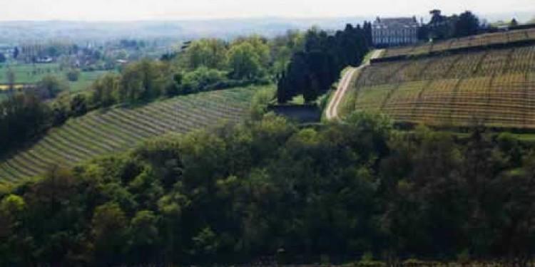 Il punto sui vini naturali del pioniere del biodinamico Nicolas Joly