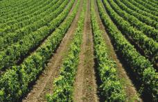Annate storiche di vini mitici (16): Umbria e Abruzzo