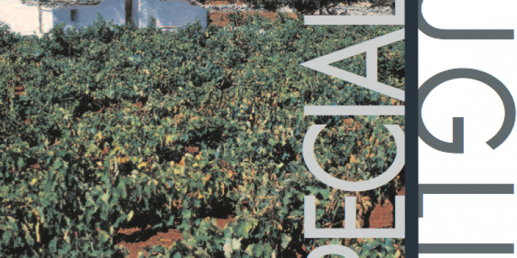 I nostri report: Puglia