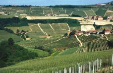 Speciale Piemonte: Prunotto, una classica modernità famosa nel mondo