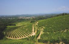Speciale Piemonte: Travaglini, una bottiglia unica simbolo del Gattinara
