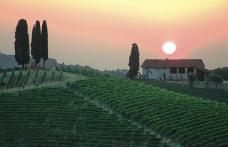 Speciale Piemonte: Michele Chiarlo