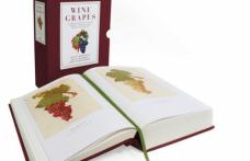 Wine Grapes: la MW Jancis Robinson firma l'enciclopedia mondiale dei vitigni