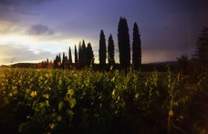 Speciale Toscana: Saiagricola