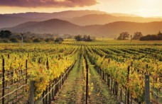 Long Meadow Ranch acquista Sauvignon blanc in Napa Valley