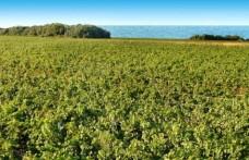 La Puglia, meta imperdibile del vino per Wine Enthusiast