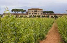 Tempranijo Casale del Giglio: tocco di Spagna nell'Agro Pontino