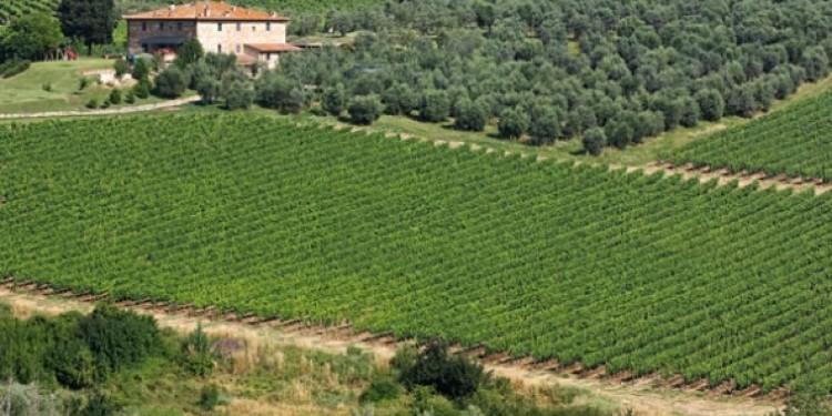 Pinot nero d'Italia. Quello di Toscana e Marche intrigante e corposo