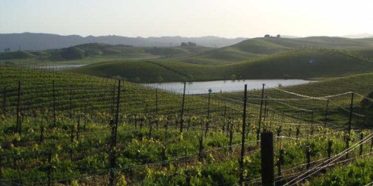 Bill Price acquista Gap's Crown, leader californiano del Pinot nero