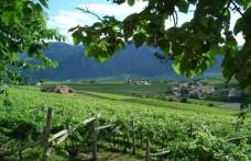 Pinot nero d'Italia. Alto Adige espressioni d'alta quota