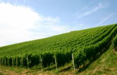 Le degustazioni dell'enoluogo: protagoniste Bianchi, Le Piane e Ca' Nova