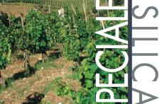 I nostri report: Basilicata