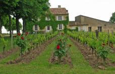 Clos Fourtet acquista tre micro-tenute a Saint-Émilion