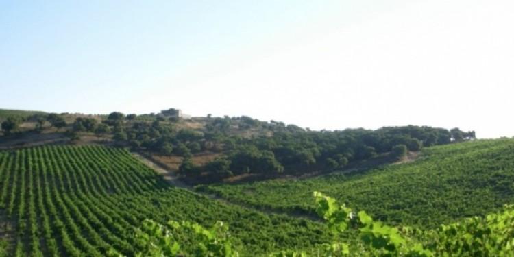 Le degustazioni dell'enoluogo: protagoniste La Kiuva, I Doria e Gallura