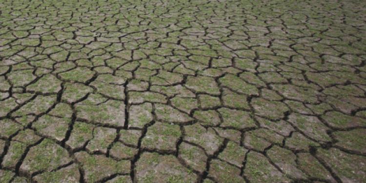 Previsioni 2050: la vigna migrerà verso nord