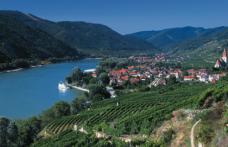 Wachau, lucertola del Danubio
