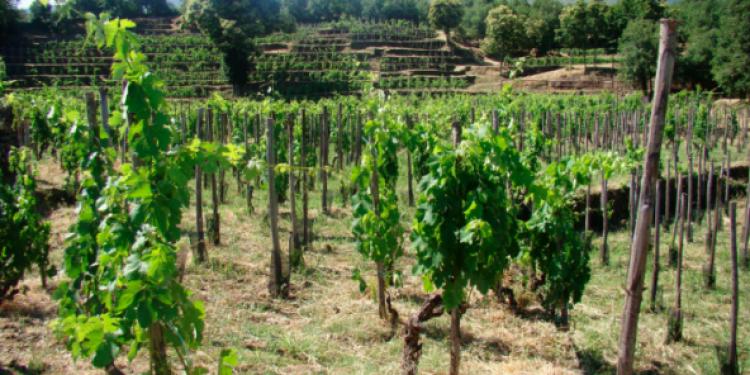 Cusumano stregato dall'Etna: acquistati 15 ettari